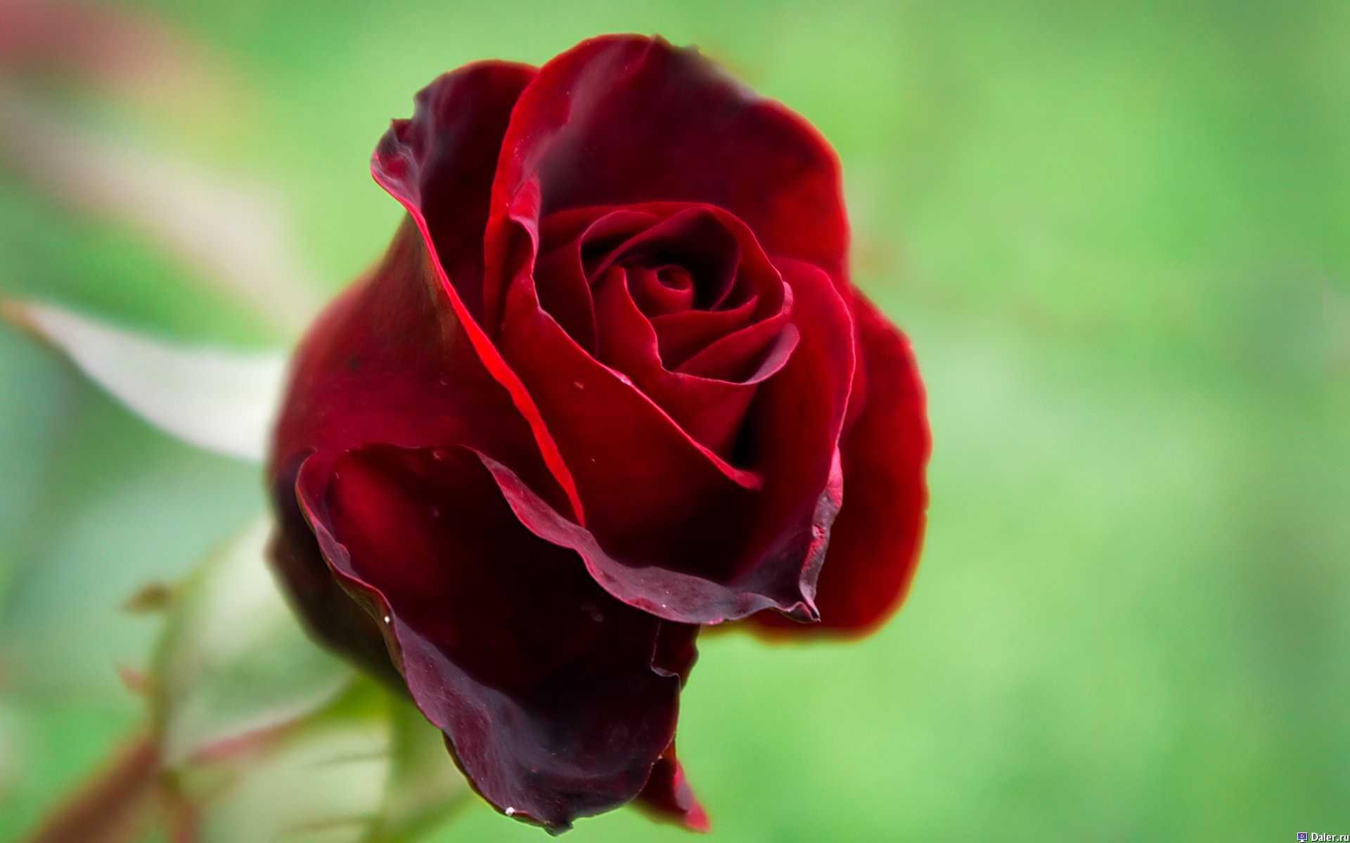 В Швеции создали розу-киборга