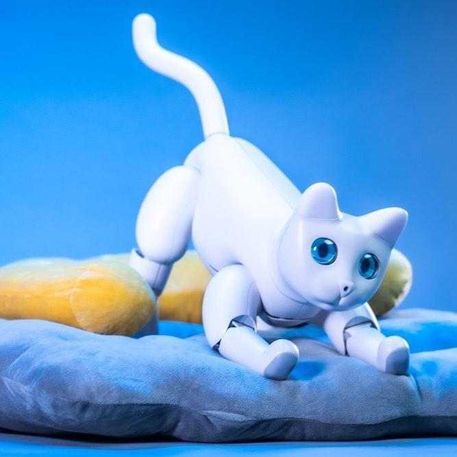 На выпуск робота-кота MarsCat собрано почти в десять раз больше средств, чем был