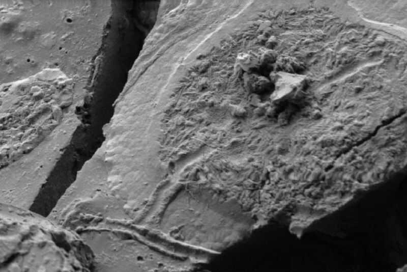 Используя сканирующую электронную микроскопию (SEM), судебные археологи нашли доказательства человеческих нейронов в останках одной из жертв извержения вулкана Mt. Везувий в 79 году нашей эры.