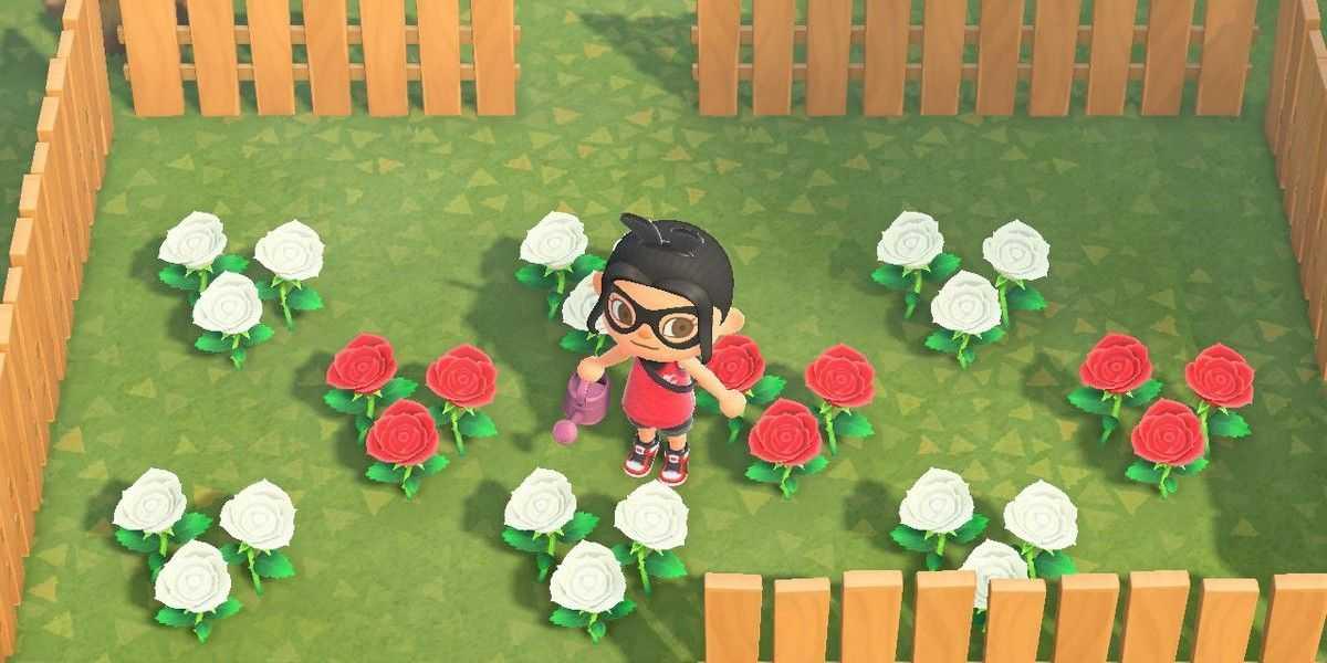 Animal Crossing New Horizons: где найти розы